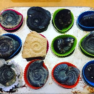 A baking tray with ammonite fossils in cupcake cases and a single ammonite made out of shortbread